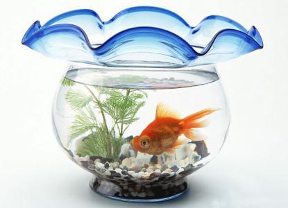如何選擇最佳的魚缸擺放風水方位