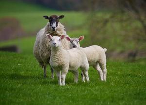 1979年属羊的人2019年运势详解