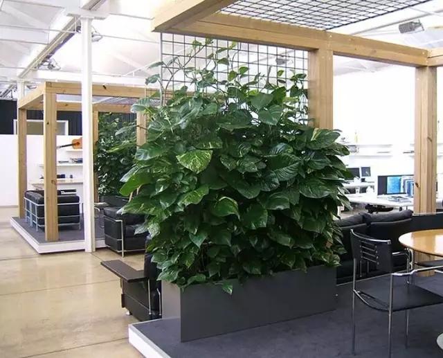办公室摆放什么植物防辐射
